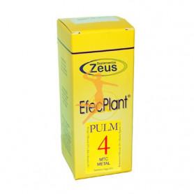 EFECPLANT 4 PULM ZEUS