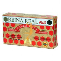 REINA REAL PLUS (JALEA REAL) ROBIS