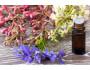 Flores de Bach, ¿qué remedios aportan estos productos naturales?